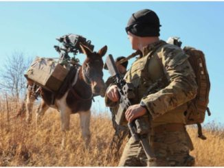 An Army Special Forces Soldier guides his pack animal during training. (Photo U.S. Army, 2017)